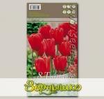 Тюльпан простой поздний SKY HIGH SCARLET, 8 шт.
