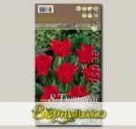 Тюльпан Грейга RED RIDING HOOD, 8 шт.