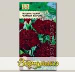 Гвоздика садовая Черный Король, 0,1 г
