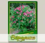 Роза Морщинистая, 0,5 г (? 45 шт.)