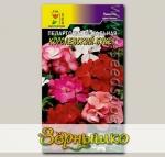 Пеларгония Королевский букет, Смесь, 0,02 г