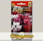 Цикламен персидский Крупноцветковый, Смесь, 3 шт.