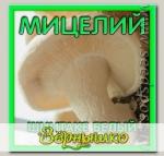 Мицелий зерновой Шиитаке Белый, 150 мл