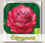Роза чайно-гибридная ДИП ПЕРПЛ, 1 шт.