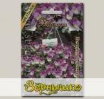 Виола ампельная Пленшифол Лаванда Блю F1, 6 шт. Platinum