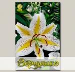 Лилия видовая AURATUM GOLDBAND, 2 шт.