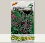 Шандра обыкновенная (Мята Лонфифолия) Радуга, 250 шт. Selekt