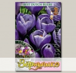 Крокус крупноцветковый GRAND MAITRE, 10 шт.