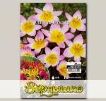Тюльпан ботанический LILAC WONDER, 10 шт. NEW