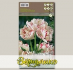 Тюльпан многоцветковый BELICIA, 8 шт.