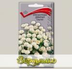 Хризантема девичья Сноу Бол, 0,05 г