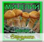 Мицелий зерновой Опенок Толстоногий, 150 мл