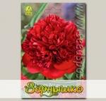 Пион травянистый RED CHARM, 1 шт.