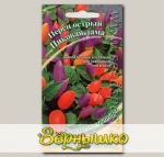 Перец острый кустарниковый Пиковая дама, 5 шт. Семена от автора