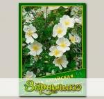 Роза Алтайская, 0,5 г (? 20 шт.)