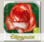 Роза чайно-гибридная ИГУАНА, 1 шт.