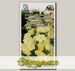 Флокс Друммонда Бьюти Йеллоу, 0,2 г