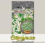 Изотома Тристар Белые звездочки, 5 шт. PanAmerican Seeds Профессиональные семена