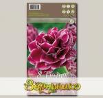 Тюльпан махровый поздний DREAM TOUCH, 8 шт.