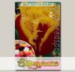 Тюльпан бахромчатый DAVENPORT, 10 шт.