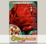 Тюльпан махровый поздний DOUBLE EMBLAZEN, 5 шт.