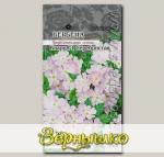 Вербена Кварц Серебристая F1, 5 шт. PanAmerican Seeds Профессиональные семена