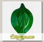 Салатник Oval Leaf 14,5х22,6х3,4 см