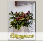 Перец декоративный Акапулько Фиолетовый, 5 шт.