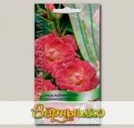 Роза полиантовая Ангельская роза, 5 шт.
