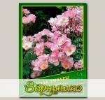 Роза Вихуры, 0,5 г (? 40 шт.)