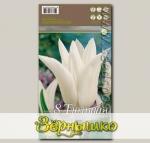 Тюльпан лилиецветный WHITE TRIUMPHATOR, 8 шт.